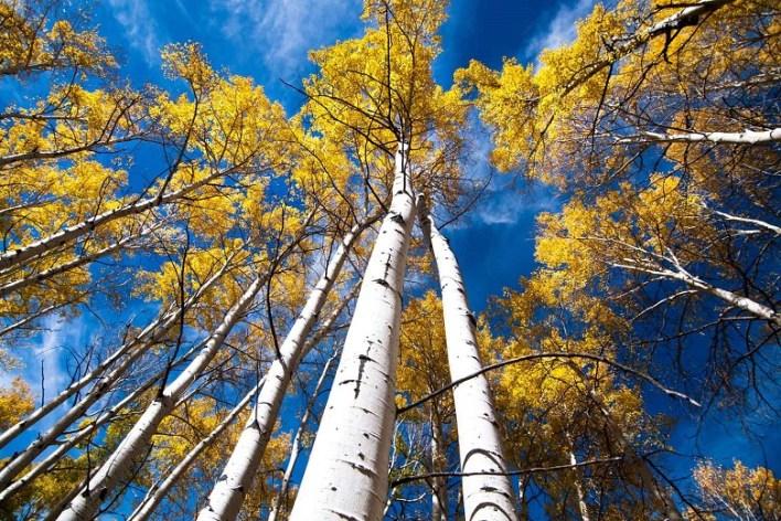 Pando: Fishlake National Forest, Utah