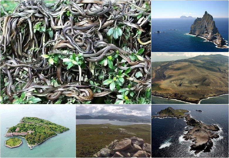 The oceans are full of islands where it is better not to set foot. Queimada Grande, ball's Pyramid, Gruinard, Bikini Atoll these islands list among the world's most dangerous places.