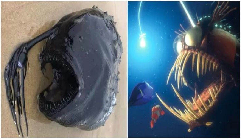 Monstrous deep-sea fish with light from 'Finding Nemo' washes up on the beach