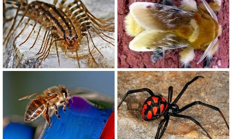 Are you entomophile? some poisonous insects list