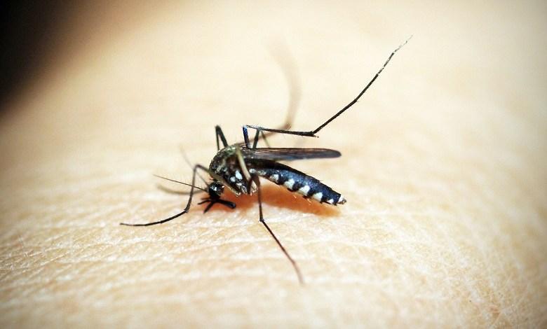Australian scientists have invented a patch vaccine against Dengue virus