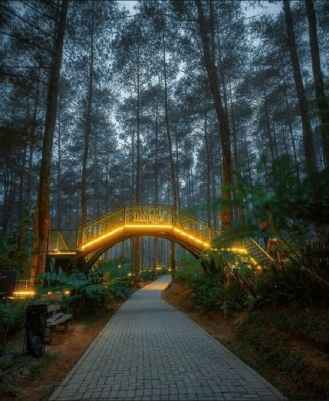 Forest fire bridge in the land of orchids