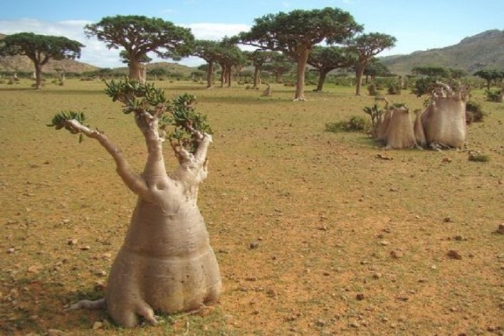 Earthly paradise in the middle of Indian Ocean: How Socotra Island looks like