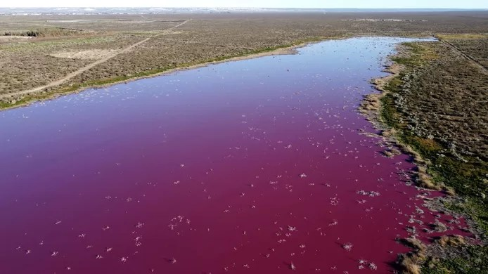 Lagoon in Patagonia turns pink due to pollution