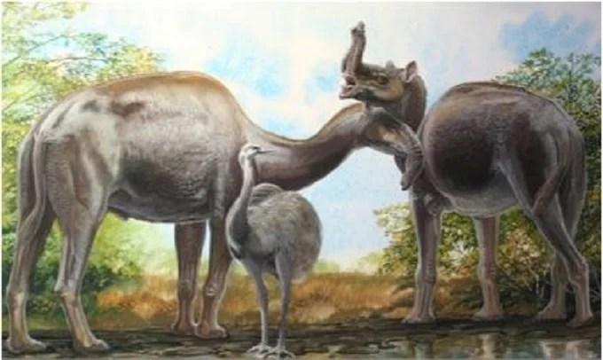 Patagonian Macrauchenia, huge and super-fast mammal extinct over 10,000 years ago