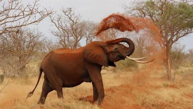 36 dead elephants found in Botswana, animals possibly poisoned