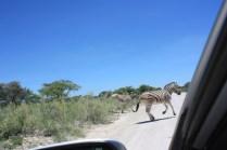 Dans le parc national d'Etosha / In Etosha National Park