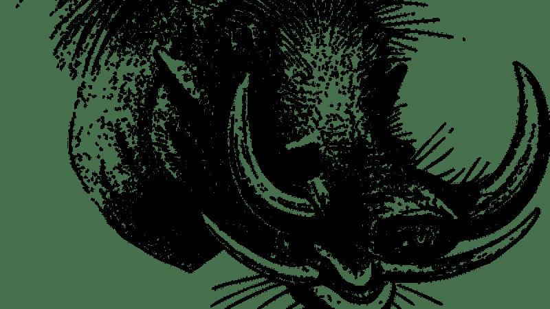 Conte du Mali, Le rire du phacochère