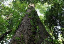 Plus grand arbre