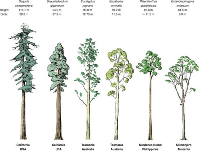Liste des grands arbres