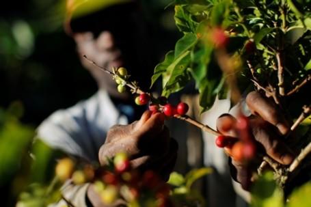 petit cultivateur au Kenya