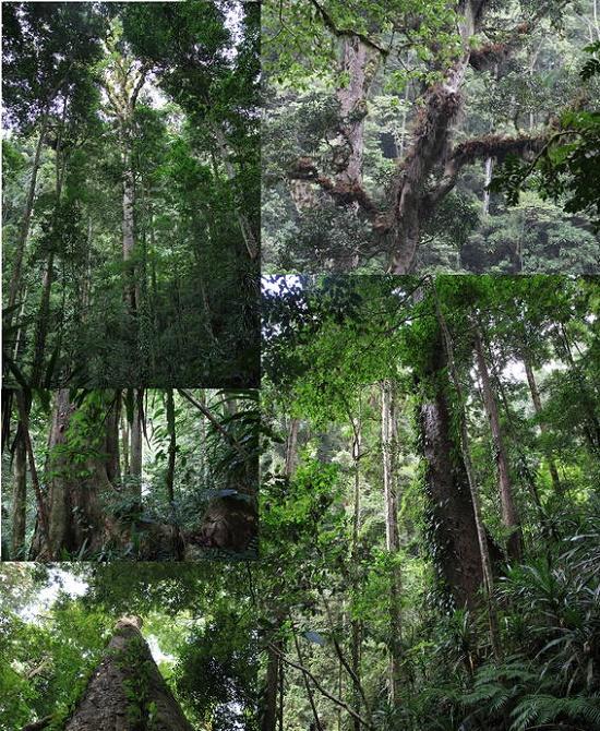 L'arbre le plus grand d'Afrique