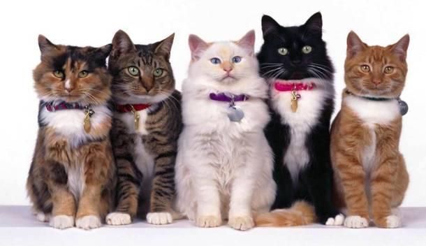 Les chats 20 des animaux les plus intelligents au monde