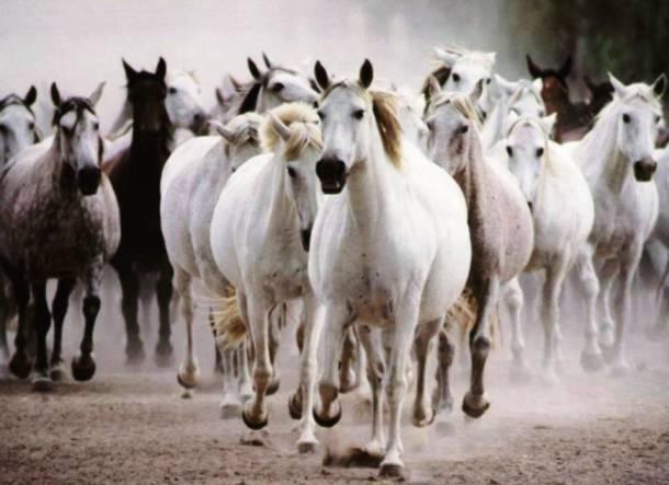 Les chevaux 20 des animaux les plus intelligents au monde
