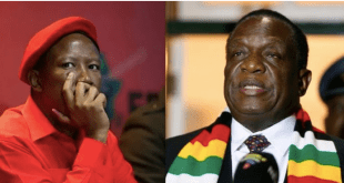 Shut up your uncircumcised mouth: Zimbabwe government warns Julius Malema