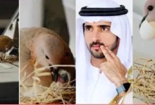 Photo of Dubai Crown Prince Leaves Luxury Car For Birds To Build Nest On It | Video