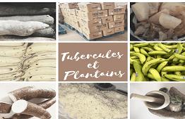Tubercules et Plantains Africains