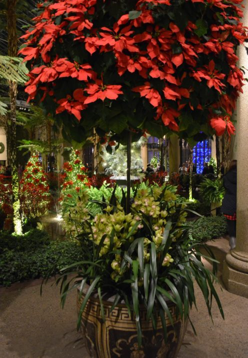 THE MAGNIFICENT LONGWOOD GARDENS AT CHRISTMAS After