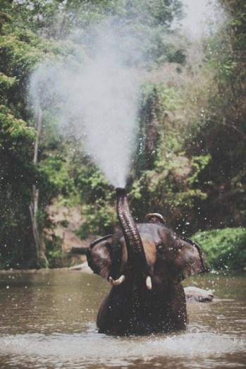 elephant spray