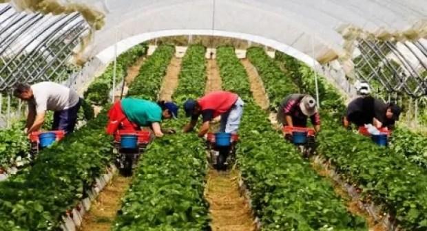 أكادير : مهنيون يتباحثون سبل النهوض بالاستثمار في المجال الفلاحي والرفع من صادراته