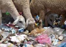 +صور:تدهور الوضع البيئي بأيت ملول محور تقرير ميداني لجمعية إيكولوجي