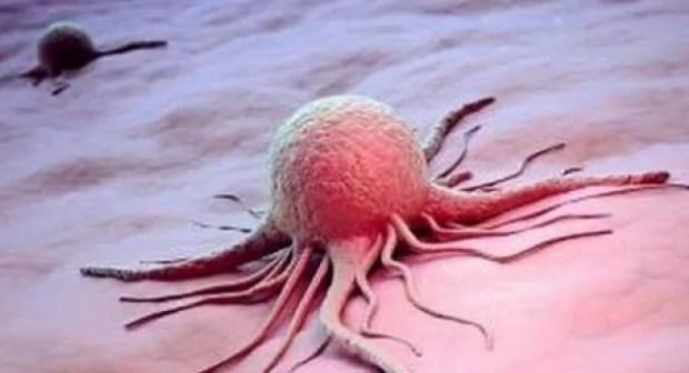 هام  لمرضى السرطان: فاكهة توجد بكثرة بالمغرب تعالج نهائيا سيدة مصابة بالمرض الخبيث