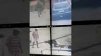 شاهد كلب يوقف لص في مطاردة مع الشرطة