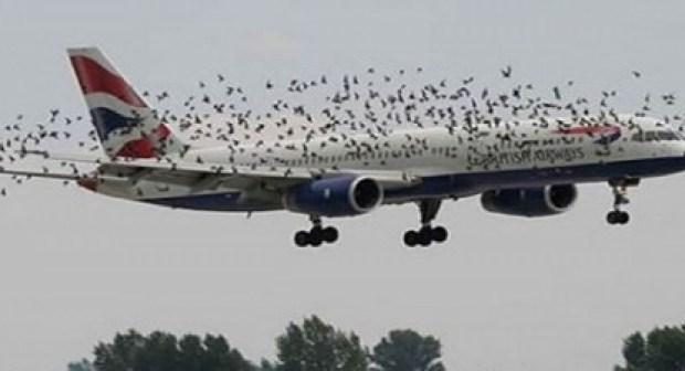 طائرة تفرغ شحنة كبيرة من الفضلات البشرية على رؤوس جمهور حفل غنائي