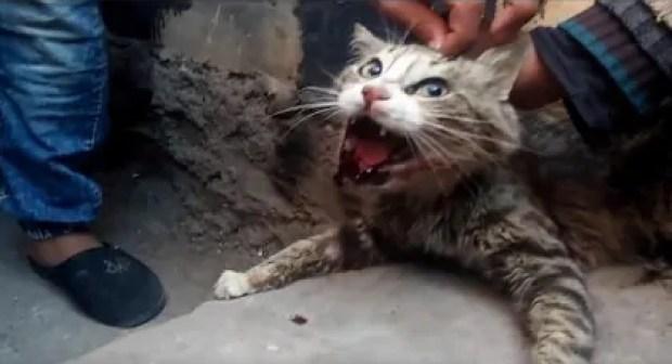 نهاية مأساوية للمشعوذة التي تمارس الدجل بخياطة أفواه القطط داخل السجن