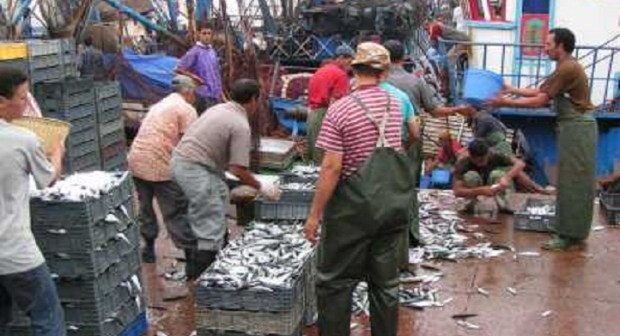 """""""حظر الصيد"""" الأربيان يثير غضب الصيادين بسواحل أكادير"""