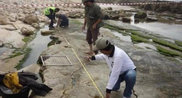 وزارة الثقافة تتخذ هذا القرار بخصوص موقع آثار أقدام ديناصورات يوجد بشاطئ أنزا بأكادير