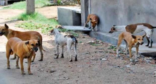 عضات كلاب ضالة تتسبب في إصابات خطيرة لثلاثة أطفال بتيزنيت.