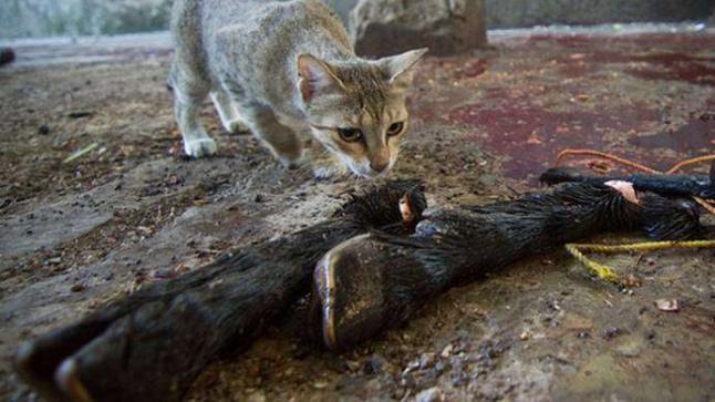 أين ولماذا تختفي القطط صباح عيد الأضحى المبارك ؟!