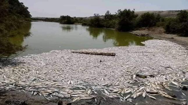 تقرير بيئي يكشف السبب الحقيقي لنفوق الأسماك بواد ماسة