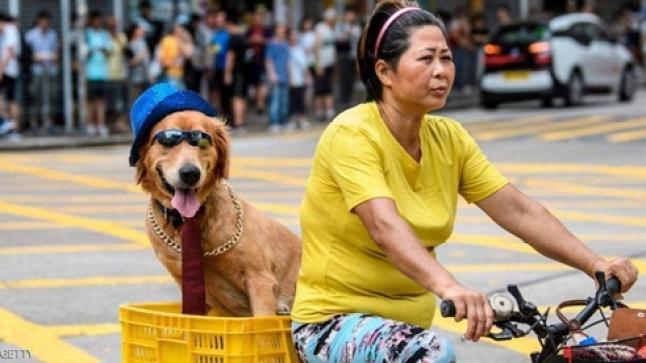 دراسة حديثة.. امتلاك كلب يطيل العمر