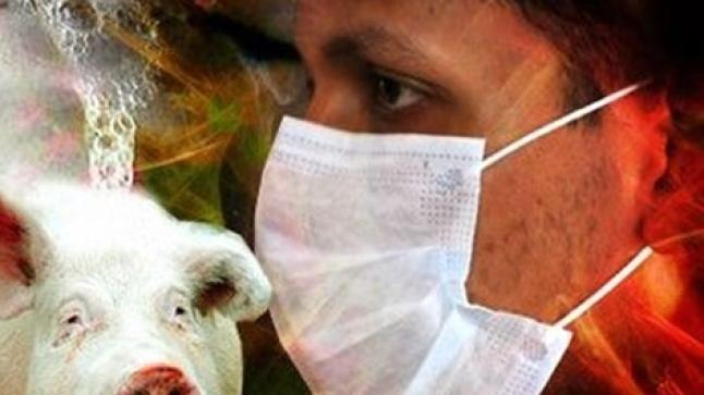 """اكتشاف نوع جديد من فيروس """"انفلونزا الخنازير"""" قادر على التسبب بجائحة عالمية"""