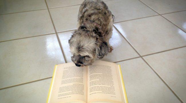 Lupe lee el libro