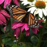 Attracting Birds and Butterflies and other Beneficial Creatures to your Garden!