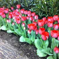 It's Time to Plant Bulbs for Spring Color!