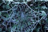 spiderweb in frost PJA 4880