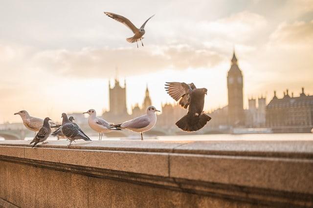 que hacer en Londres