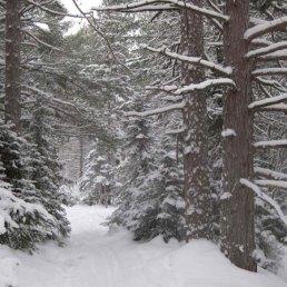 School-Forest-trees-big