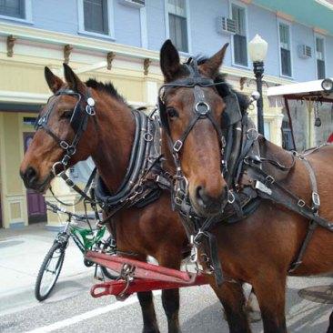 Horses-large