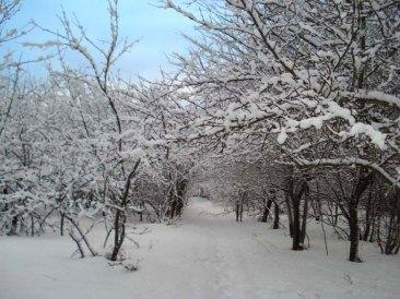 Winter-path-big