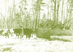 logging-postcard-3-big