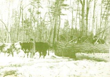 logging-postcard-3-big