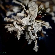 Ice crystal flower nature art photography and greeting card by AgathaO