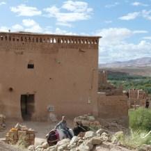 2019DE0382-Hay Al Inbiaat-Scene de vie Ane monte (2)