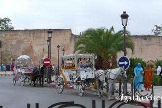 2019NM0175-Meknes-Caleches