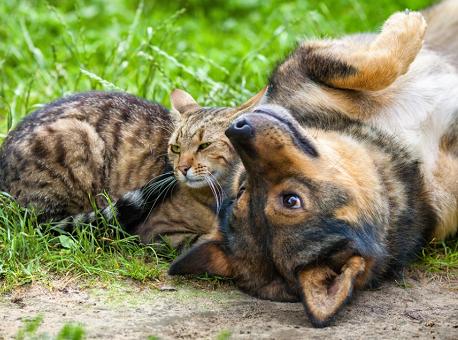 30-09-2020 lei-aumenta-pena-para-maus-tratos-a-caes-e-gatos